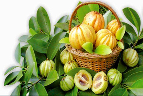 What is Garcinia Cambogia (HCA)?